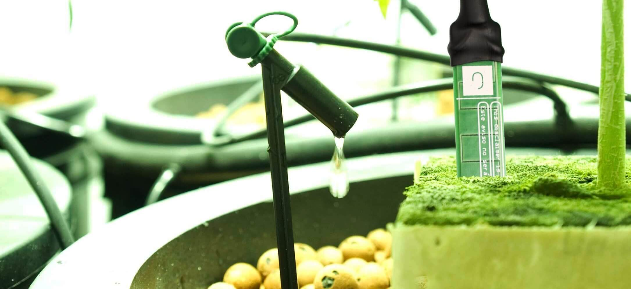 Front view of a plants pot with drip irrigation system and the GroLab™ SoilBot Moisture Sensor inserted on the substrate